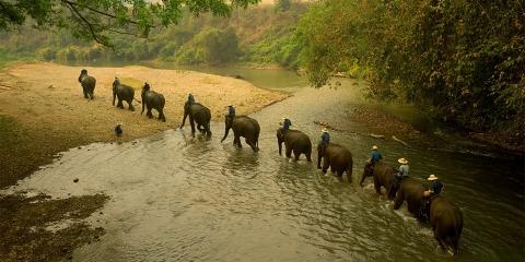 ssstendhal arte profundidad de campo training center de elefantes tino soriano 05